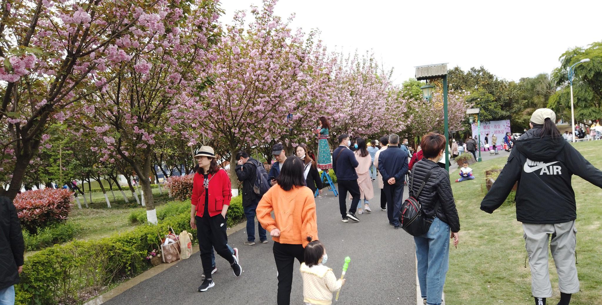 成都市青白江区 青白江凤凰湖樱花季 好多人啊你来了没
