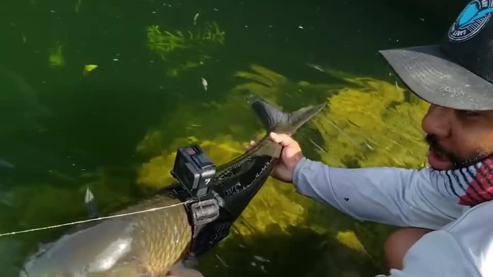 小哥把摄像机绑在鱼身上,会拍到怎样的水下世界,一起看看!