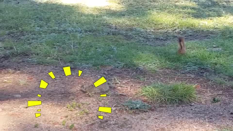 土拨鼠正在地上晒太阳,不速之客的到来,将土拨鼠变成了午餐!