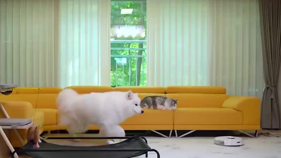 铲屎官买了个扫地机器人,猫和狗会是啥反应?太搞笑了哈哈