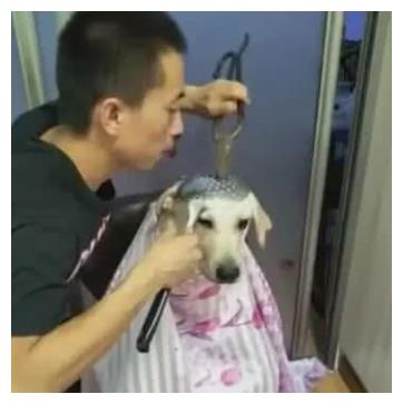 主人帮狗狗剪毛发,左手持大剪刀,右手持火锅勺!