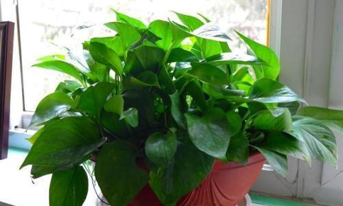 家里养3种喜水花,浇水勤一些,枝叶长不停,空气更清新!