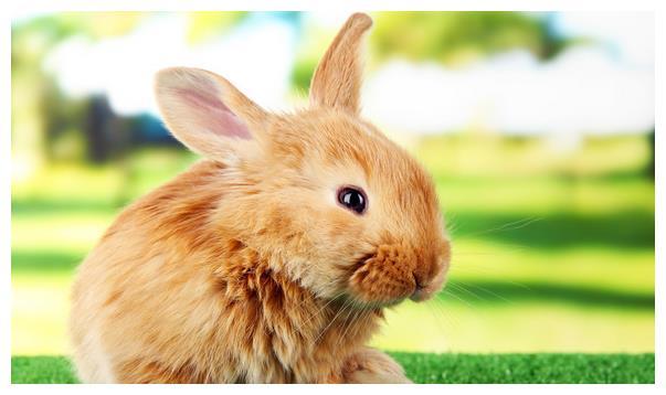 生肖兔的毕生宿命:特别是63年属兔人,后半生命真的不好?
