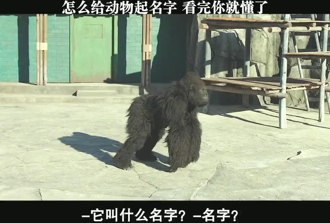 这个动物园里的动物都是人扮的,太逗了!