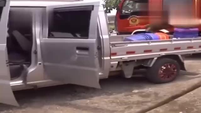 这就尴尬了,眼镜王蛇霸占了广西男子的车,不服来战啊