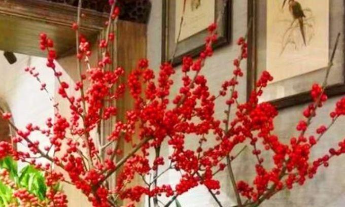 超爱开花的几种花卉,365天开花不断,花色艳丽灿烂无双