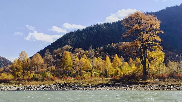 青海省 海北藏族自治州 仙米国家森林公园 金秋美景