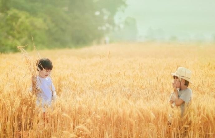 风吹麦浪,一片丰收的喜悦。