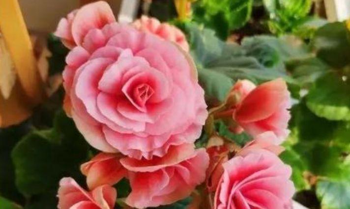 适合冬天养护的花卉,一盆千百朵,枝头花苞满,美极了