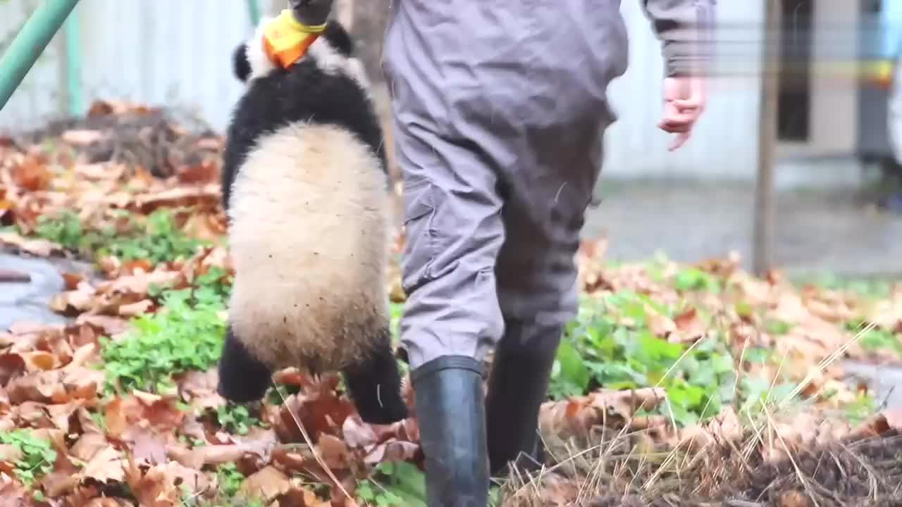 这个奶爸真时尚拎着最新款的熊猫牌挎包我也想要你们呢