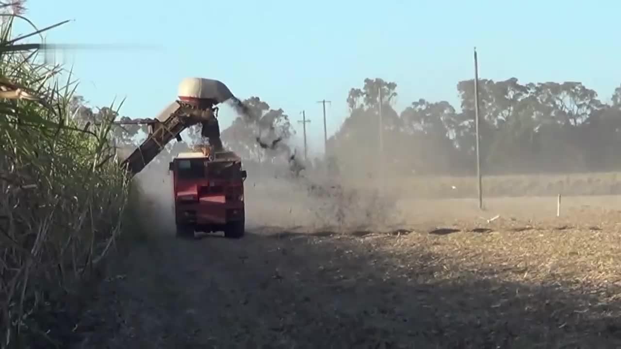 一台机器狂甩人工100倍,农民花10万买二手甘蔗收割机,效率真牛