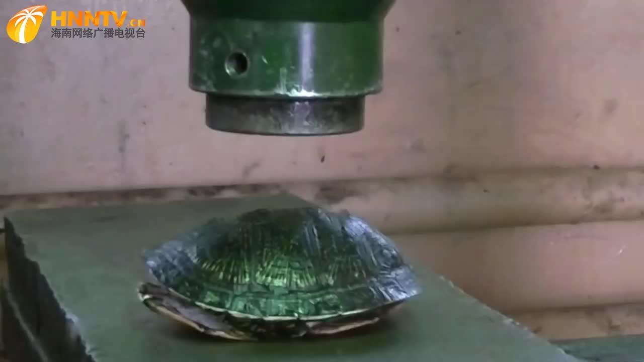 为什么蟑螂叫打不死的小强?放液压机下碾压后秒懂,名副其实!