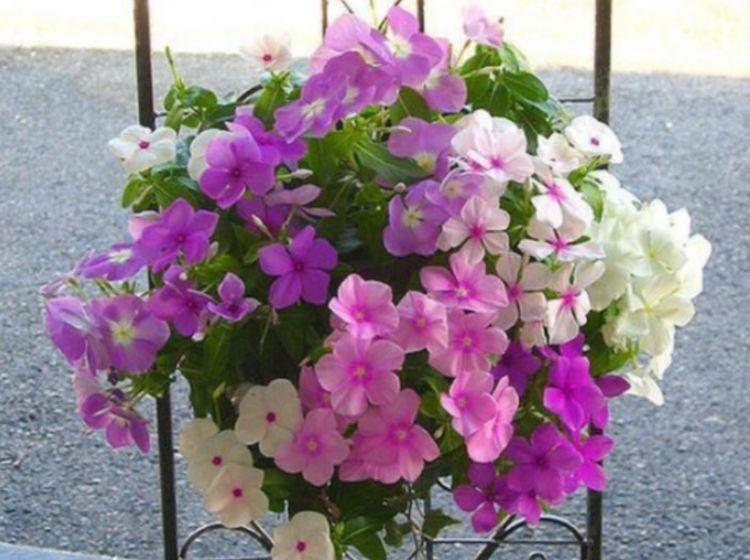 家中养护几种花卉,自带福气好养活,满树嫩绿,十分悦目