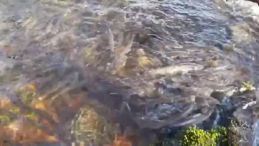 好多鱼,游上小溪流