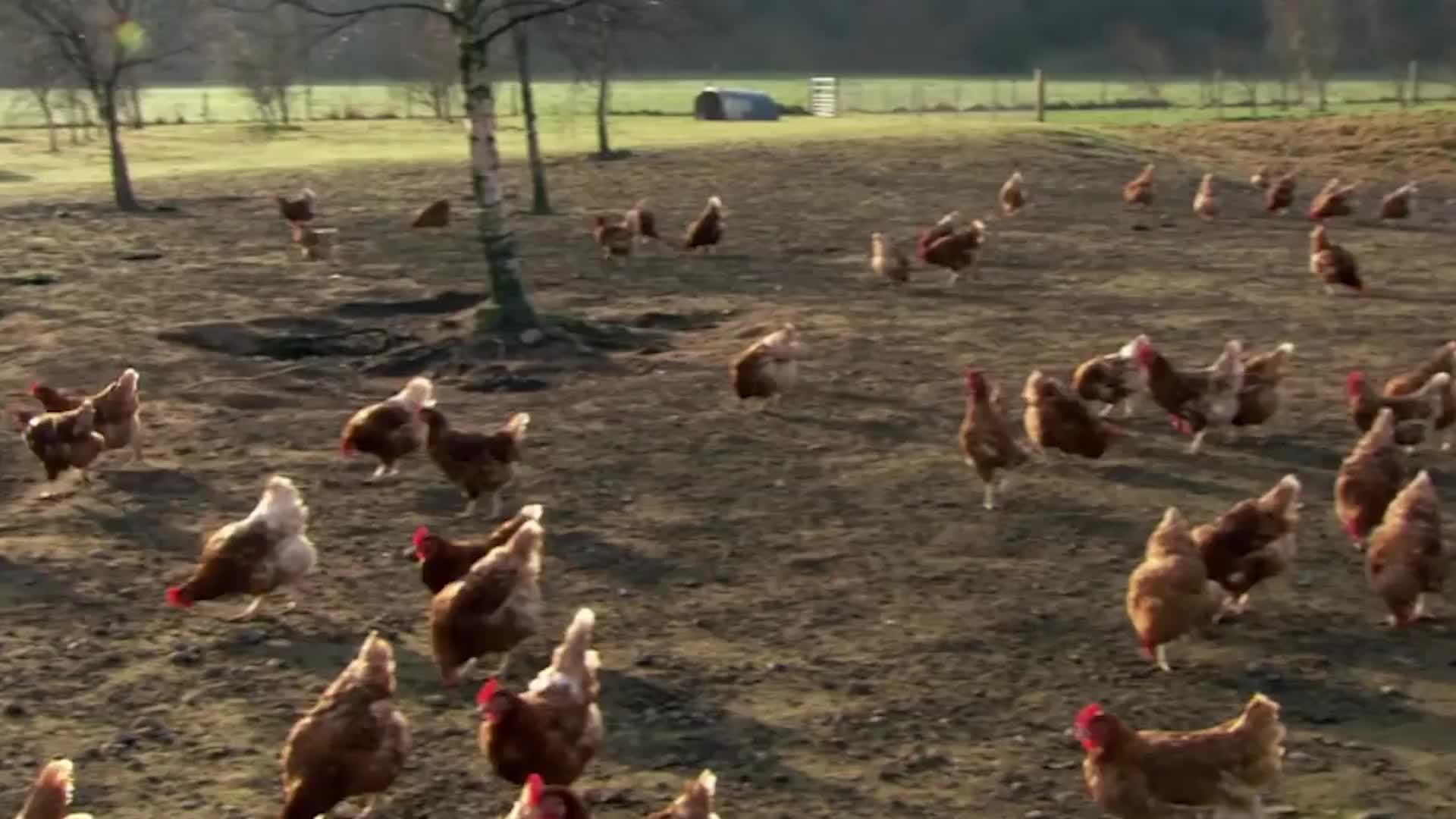 超市的鸡蛋不是母鸡下的?实拍工厂生产鸡蛋全过程,大开眼界
