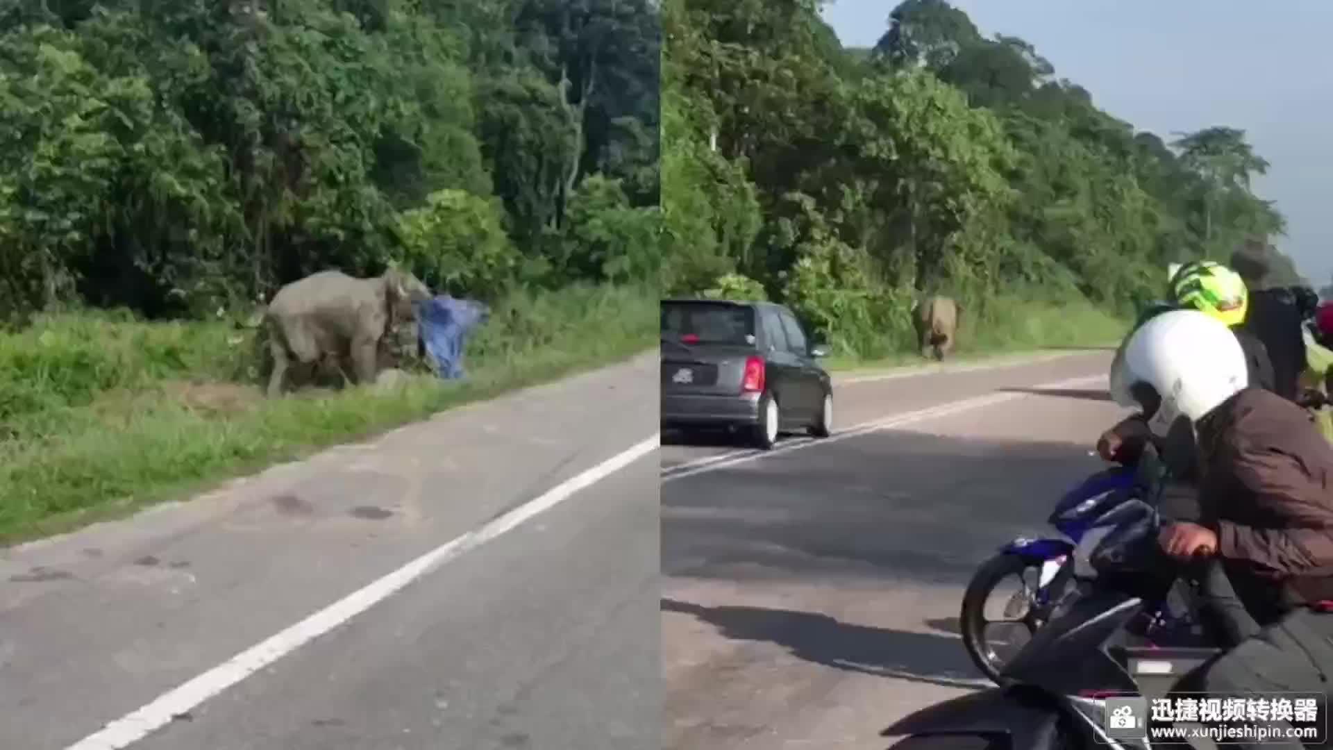 被撞小象,母象守护尸体不肯走