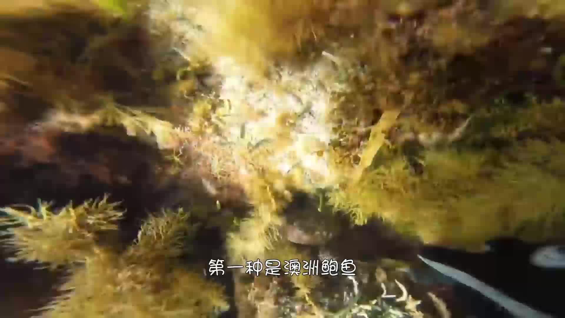世界顶级的4种海鲜,一口下去上千元,中国仅有1种上榜!