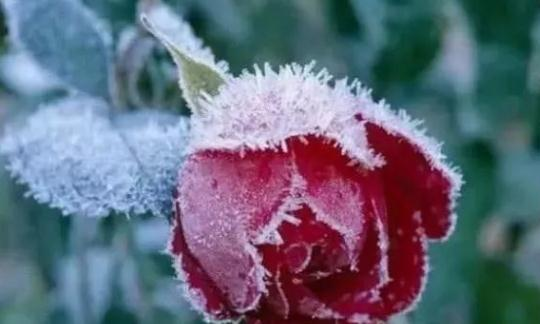 心理测试:选出一朵你最喜欢的花,测谁正在等待着你,准哭了!