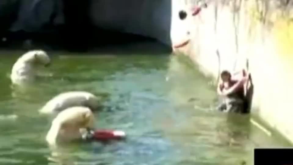 女子意外掉进北极熊窝,万分惊慌之时,北极熊的举动把人逗笑了