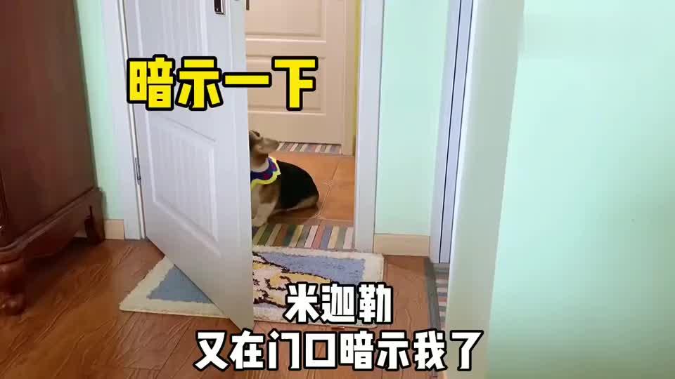 柯基爱打小报告说同伴偷吃了狗粮,铲屎官调查后剧情大反转!
