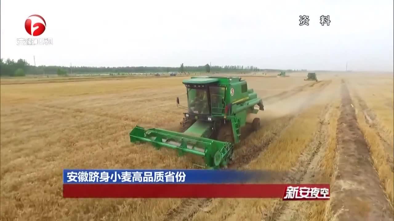 《新安夜空》安徽跻身小麦高品质省份