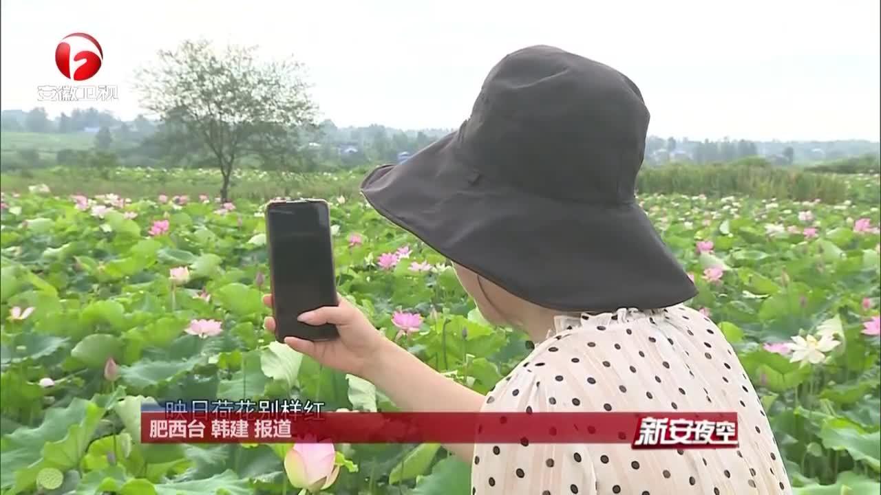 《新安夜空》长庄村:千亩太空莲  增收百万元