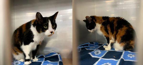 17岁的猫咪被嫌弃老了,丢弃在医院,自卑到不抬头看人