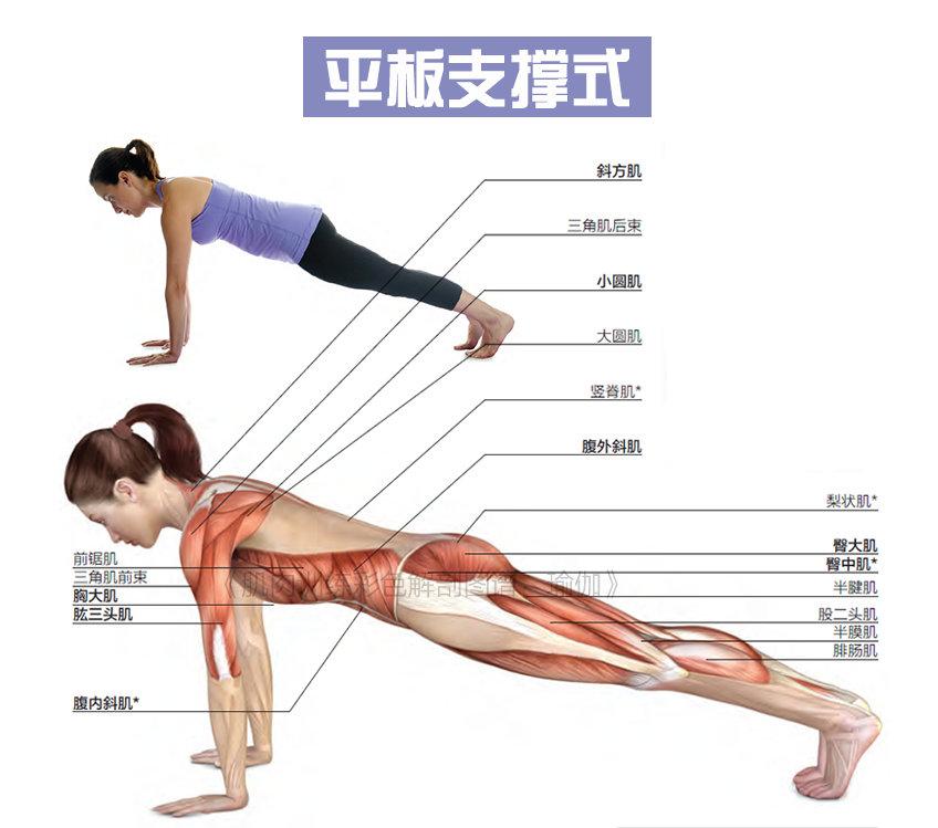 瑜伽动作中的6个支撑动作