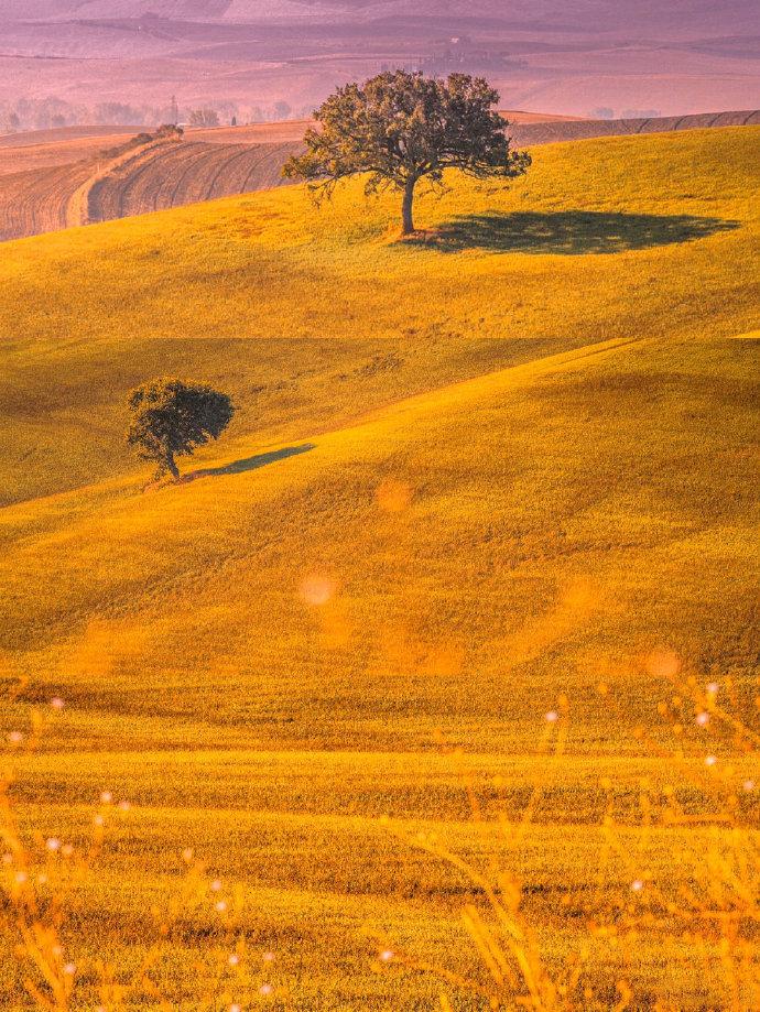 每每到意大利托斯卡纳的秋季,那芳草碧连天的美都让人流连忘返。