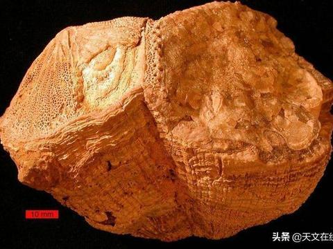 白天有多长?古代贝壳解惑:七千万年前日长比现在短半小时