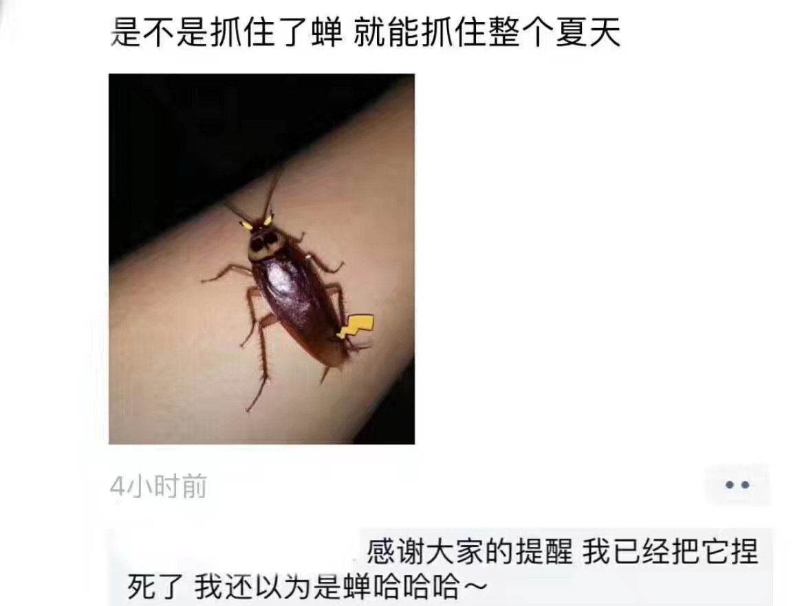 南方人民口中的巨大蟑螂是美洲大蠊北方人口中小蟑螂是德国小蠊我之