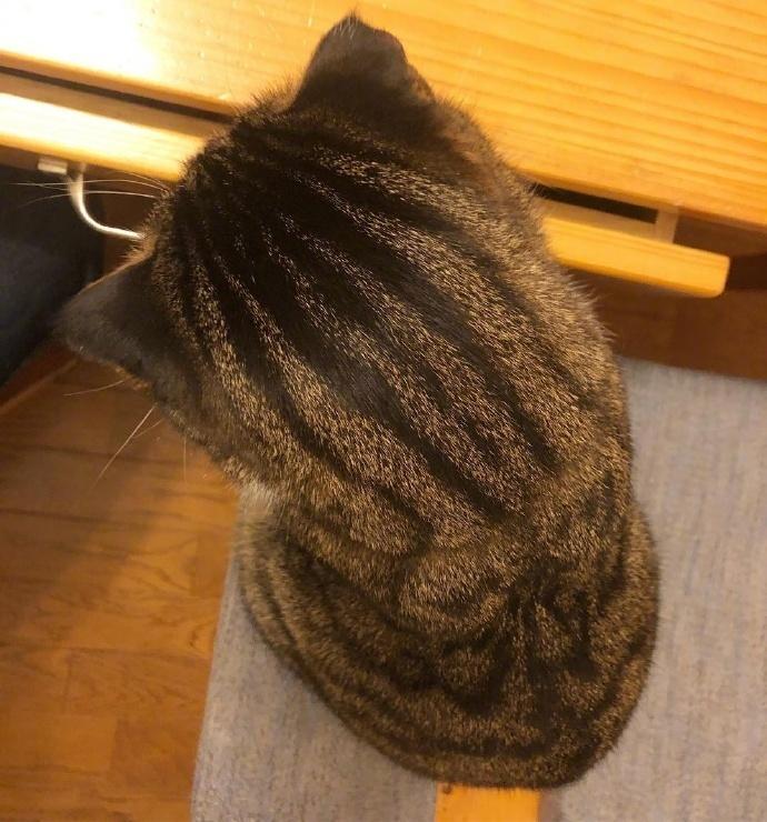 猫这个后脑勺,第一眼竟看成了大西瓜.....哈哈哈哈!