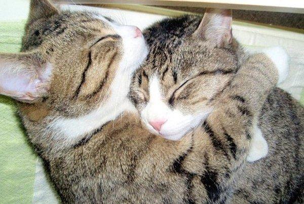 家里养两只喵,看他们相亲相爱的暖心画面