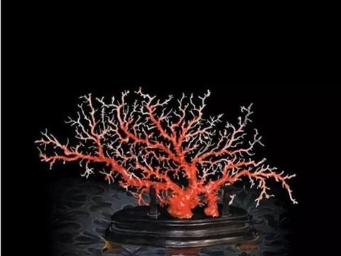 红珊瑚的等级分类,真假辨别,你学会了吗?