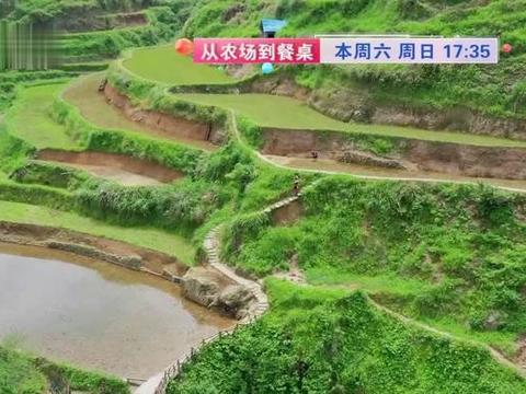 来大美瑶乡,带您寻味原生态稻田鱼!