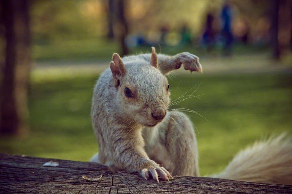 松鼠落地式是超级英雄的标配动作。