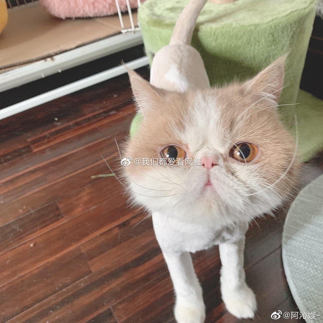 阿沁因为怕过敏所以给家里的猫剃毛了
