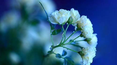 你最爱的人,往往是伤你最深的人