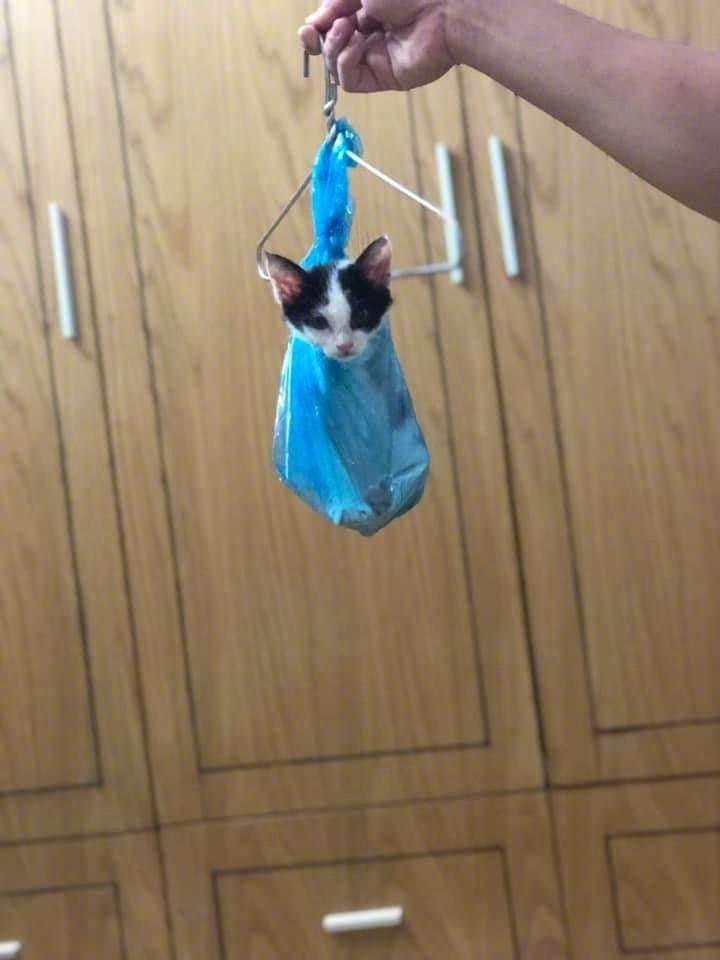 犯错后的猫咪,被各种吊起来.....