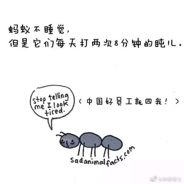 蚂蚁会打盹,水母没心脏,趣味小知识,收藏和孩子一起看!cr:网络
