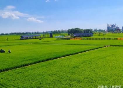 东北大米丰收在望,专家点赞农产品创新升级