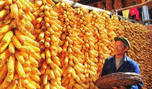 """猪价、粮价调整信息!9月20日,猪价震荡下跌,玉米""""掉价太猛"""""""