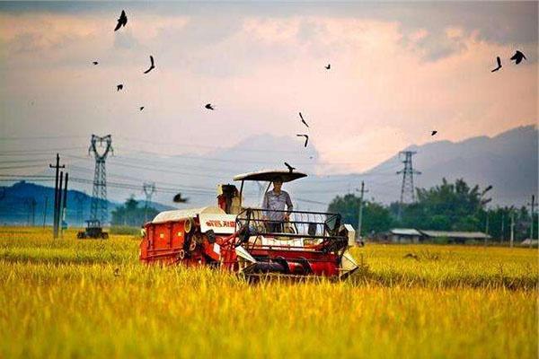 全力防控小麦病虫害