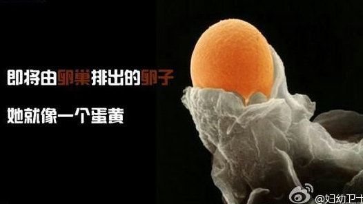 卵子最怕的7件事!你中了几个?