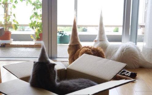 毛期收集猫猫掉的毛,做出有趣的猫毛毡