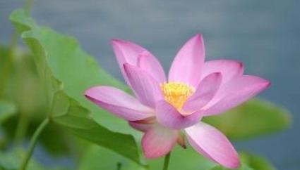 """""""姜""""也能开花,花型似荷花,样子大方出众,养在土里就能活"""