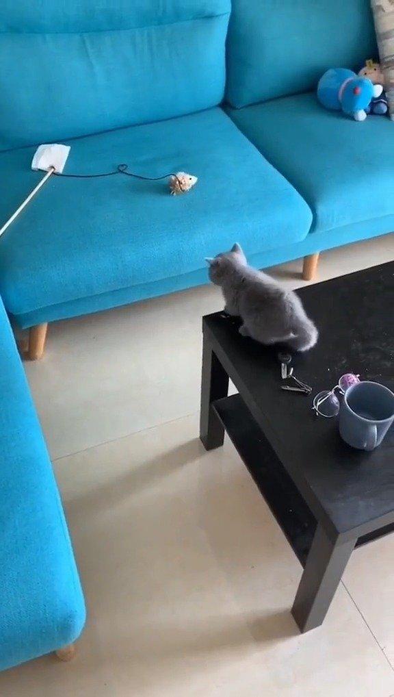 这猫的自尊心被这一跳摔碎了
