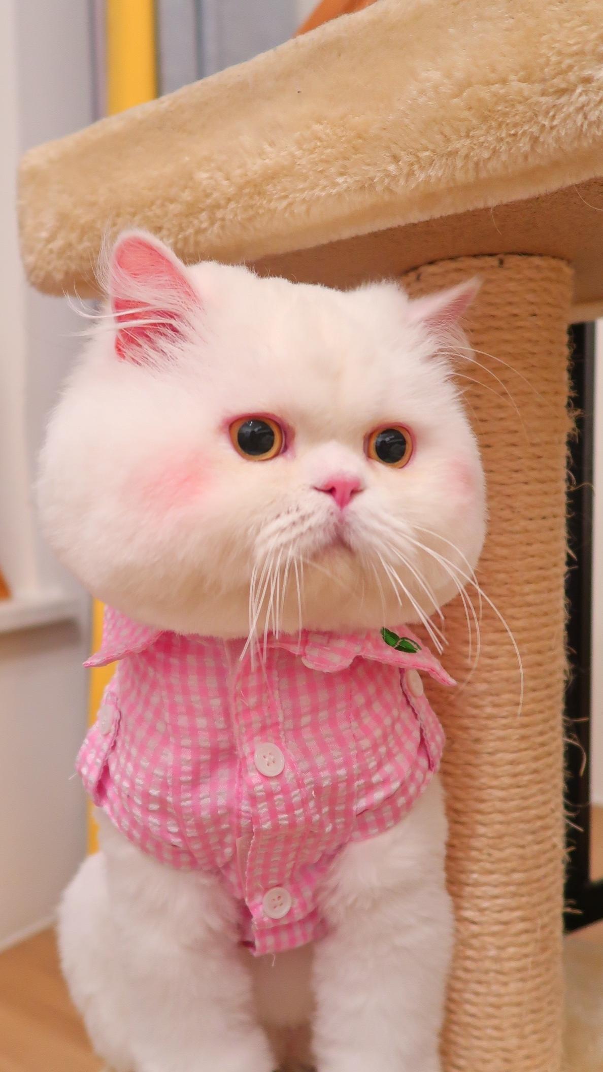超可爱的腮红猫,想捏脸