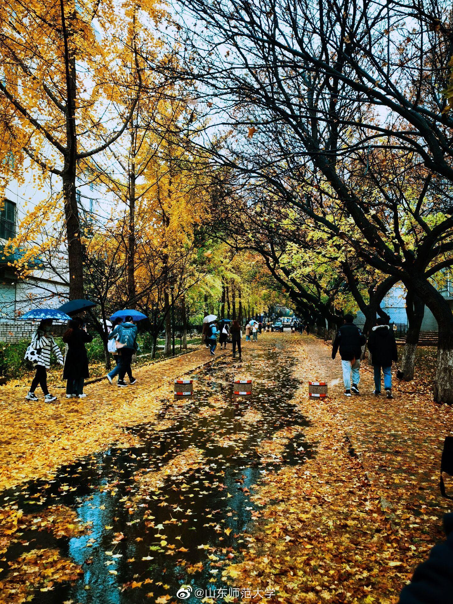 山东师范大学老校区,数以千计的树木落叶纷纷