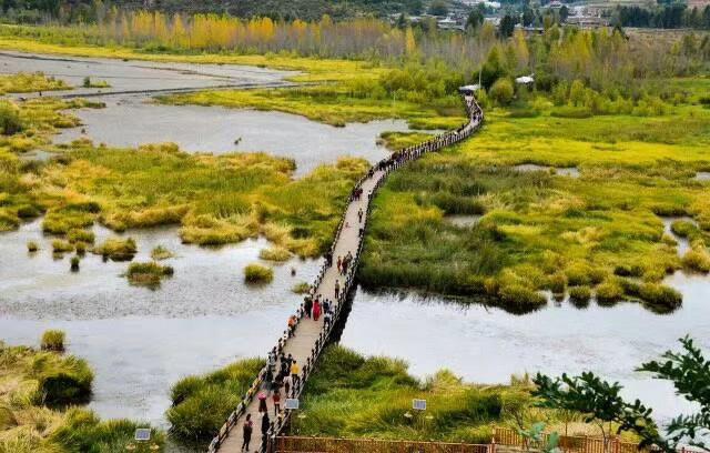 十月的泸沽湖是幸福的格桑花的天堂,在一片蓝天碧海中自由生⻓